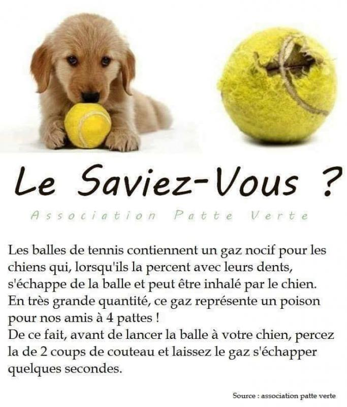 Attention aux balles de tennis
