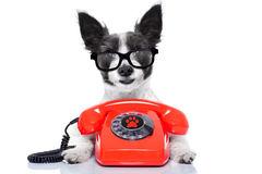 Chien au tlphone 51843065