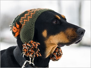 Chien froid neige