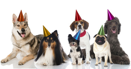 File 610 column how to celebrate dog birthday